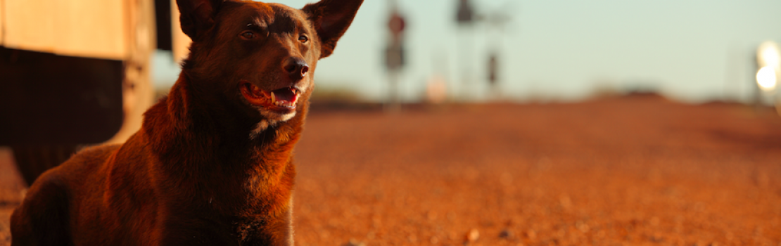 Red Dog Review