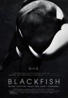 Blackfish Trailer