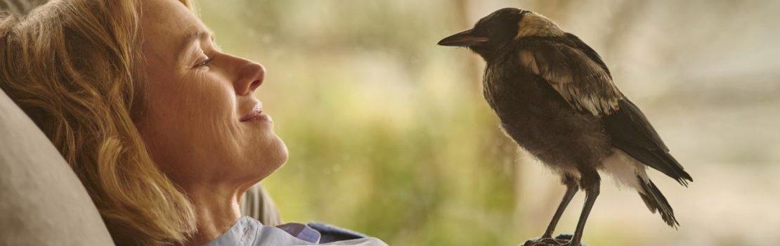 Trailer Debut – Penguin Bloom